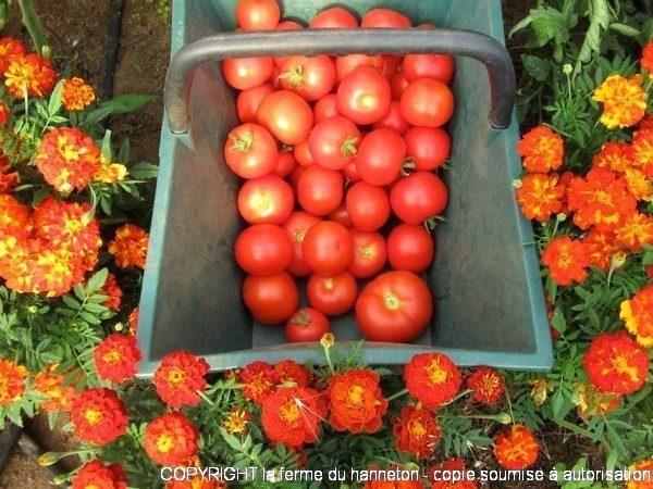 Tomates4