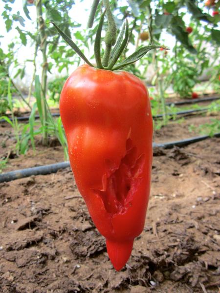 160725-tomatesVsPie-Small