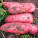 patatesdouces