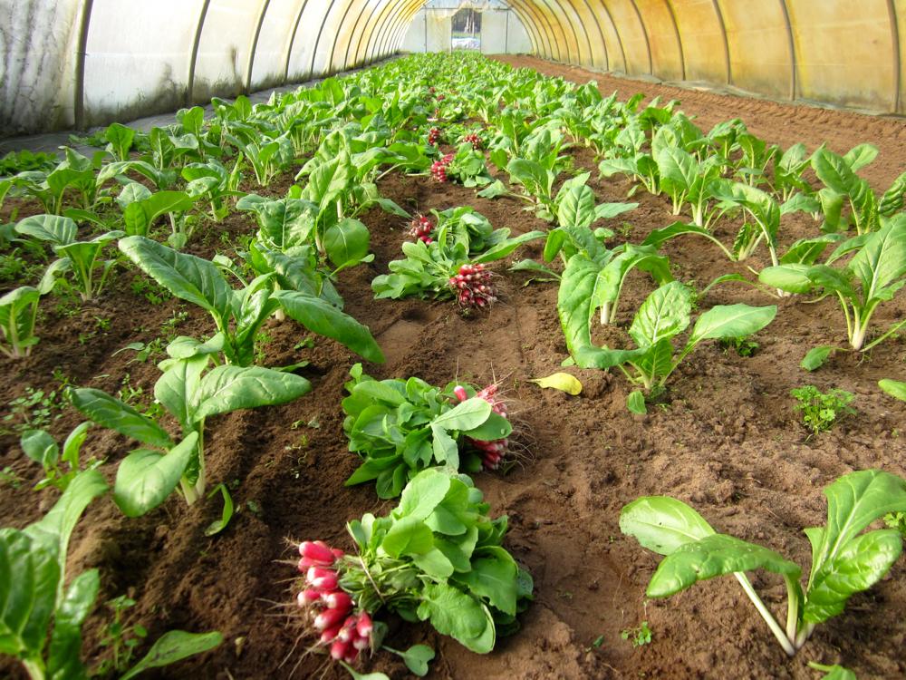 Comment planter du persil basilic thym et persil en - Comment semer du persil ...