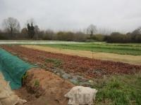 et les champs, à l'infini (enfin, ceux de ce côté là de la ferme)
