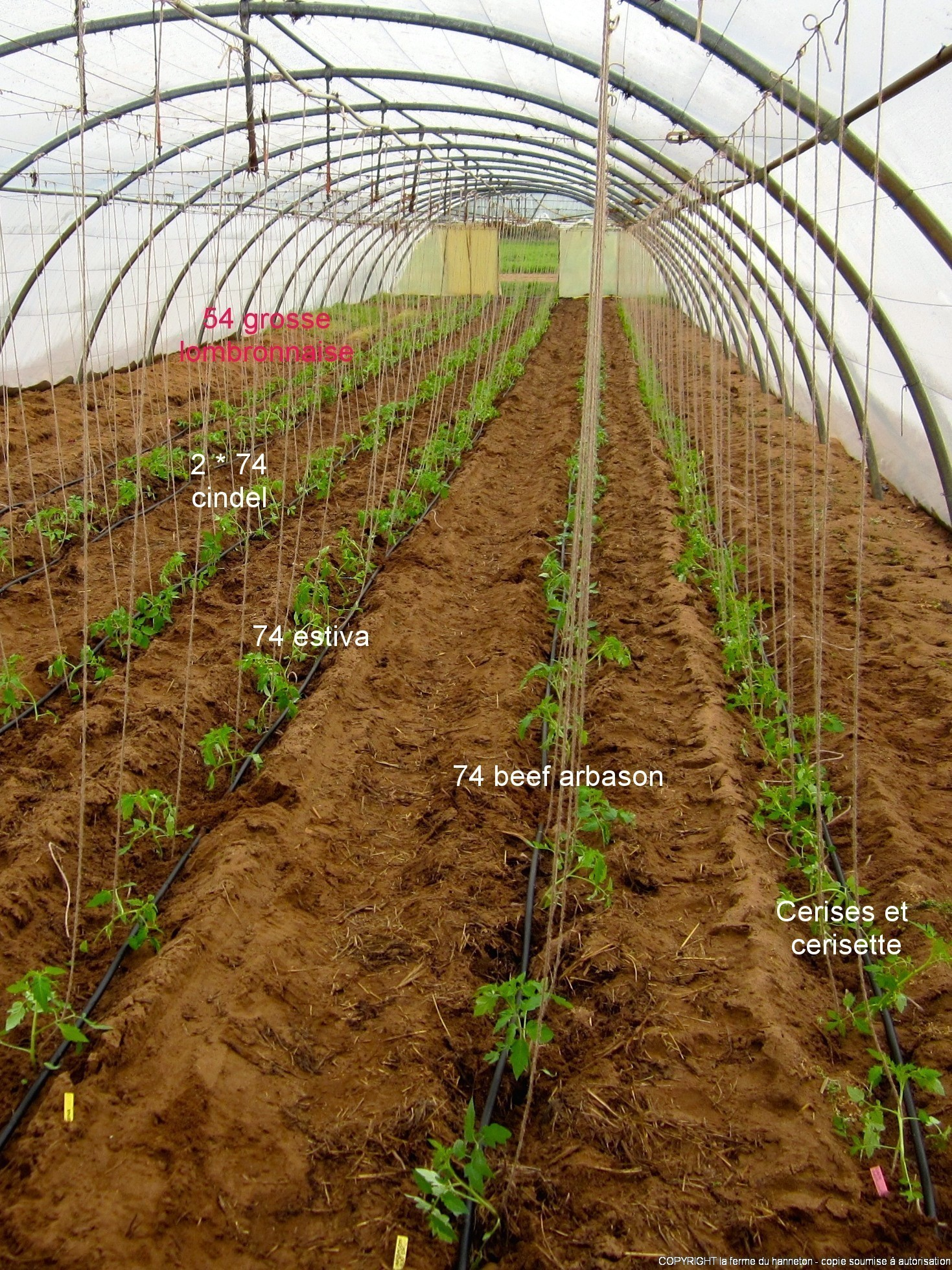 Plantation des tomates la ferme du hanneton - Planter des tomates ...