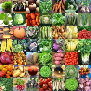 Les légumes de la ferme du hanneton