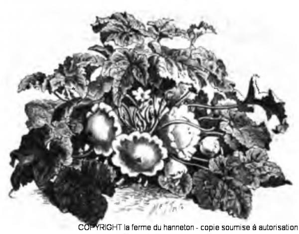 Patisson_Vilmorin-Andrieux_1883