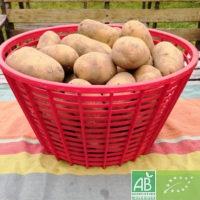 Lot  de 5 kg de pommes de terre