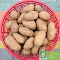Lot de 5 kg de pommes de terre fermes