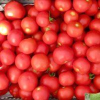 Lot de 5 kg de tomates