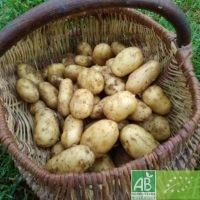 Pommes de terre d'été