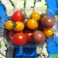 Lot de 3 barquettes de tomates cerises