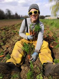 Dernière récolte de carottes !