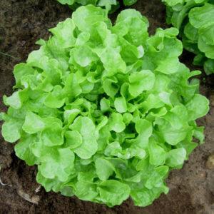SaladeFchene1