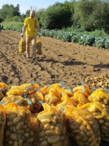 Récolte des pommes de terre 2019