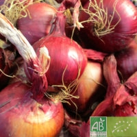 Lot 2 kg oignons rouges
