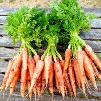 Lot de 3 bottes de carottes