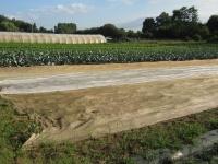 champs de choux, salsifi et carottes