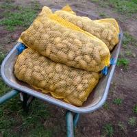 et les patates prêtes à être livrées, à Changé, EN BROUETTE ! :D