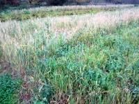 engrais vert (céréale/protéagineuse)