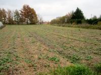 les engrais verts à travers la paille d'anciennement les courges